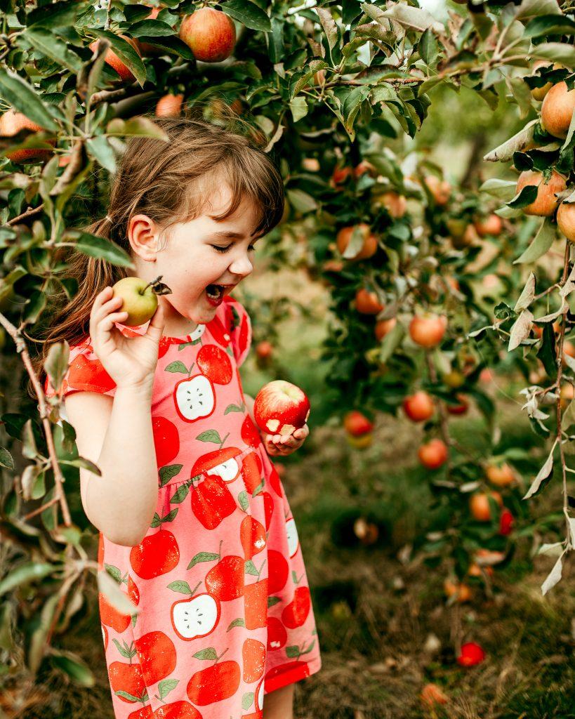 Apple Orchard Photos